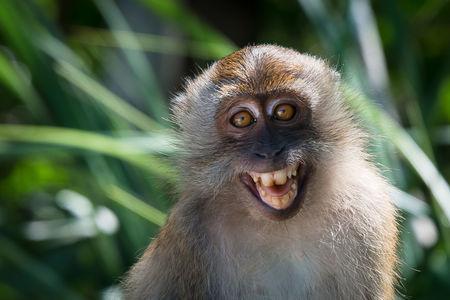 В Таиланде иностранцам разъясняют как вести себя с обезьянами