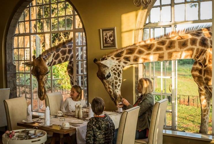 В столице Кении туристы смогут позавтракать с жирафами